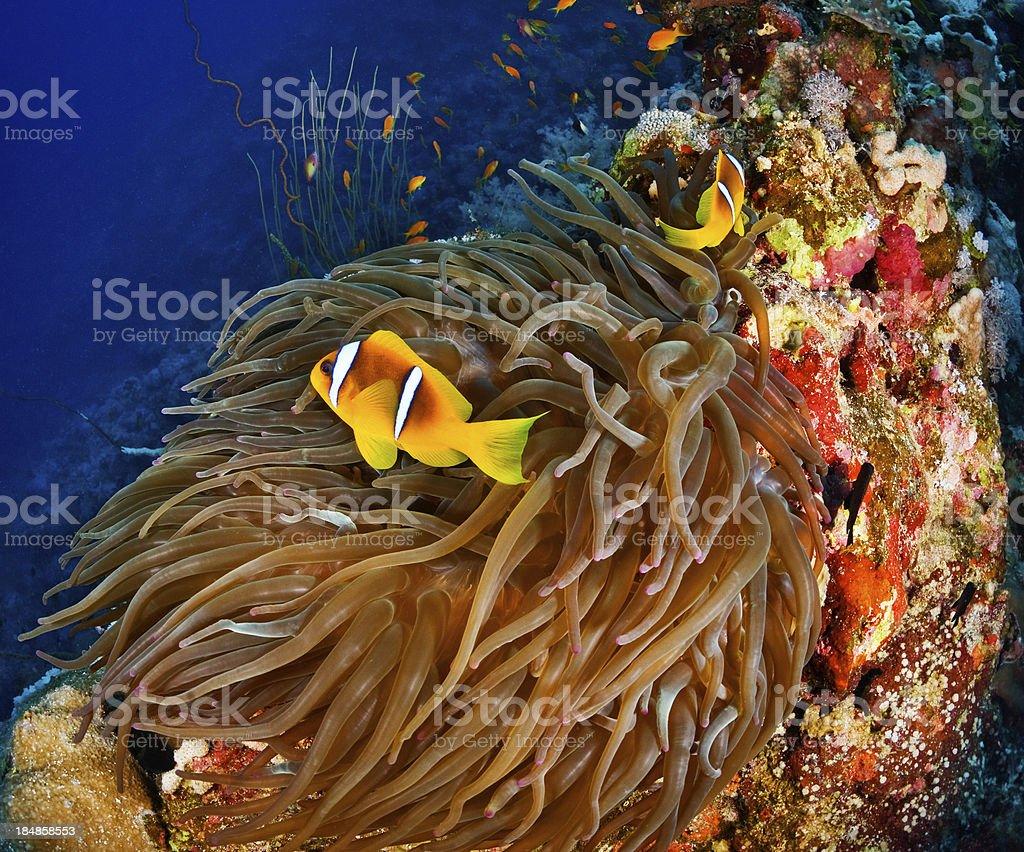 Amazing underwater wonders royalty-free stock photo