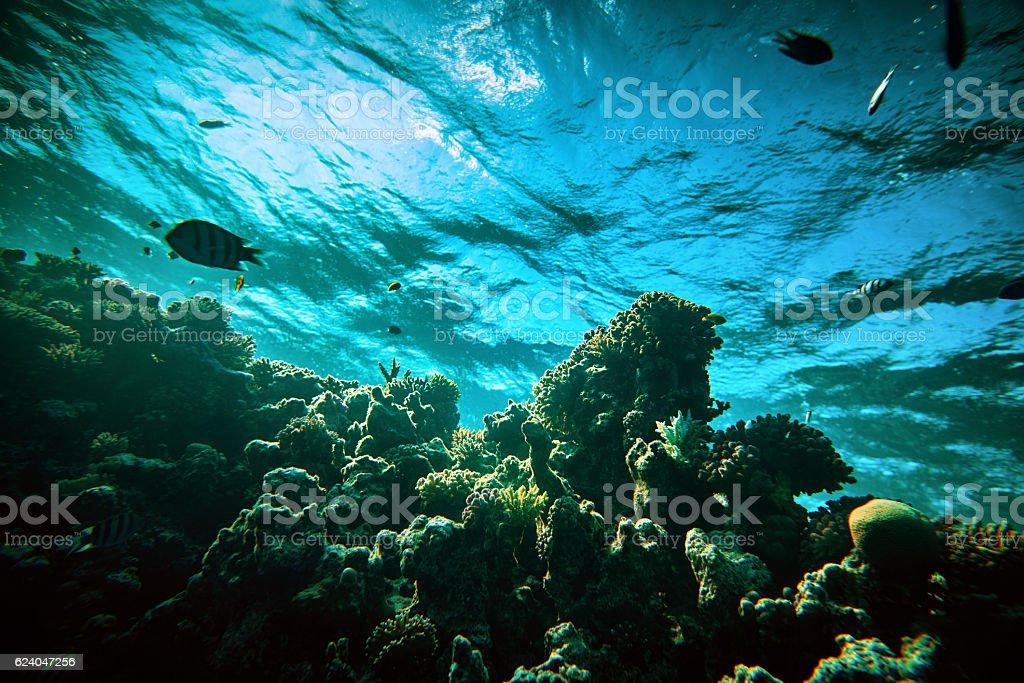 amazing underwater world stock photo