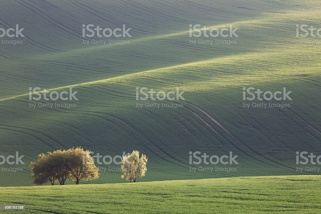 Amazing waves of hills and green and blossom trees - fresh green stock photo