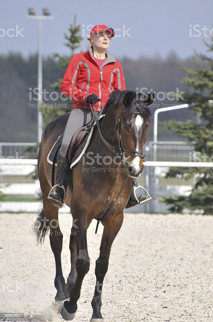Amazon on the maroon horse in gallop stock photo