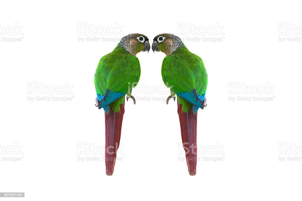 Amazone photo libre de droits