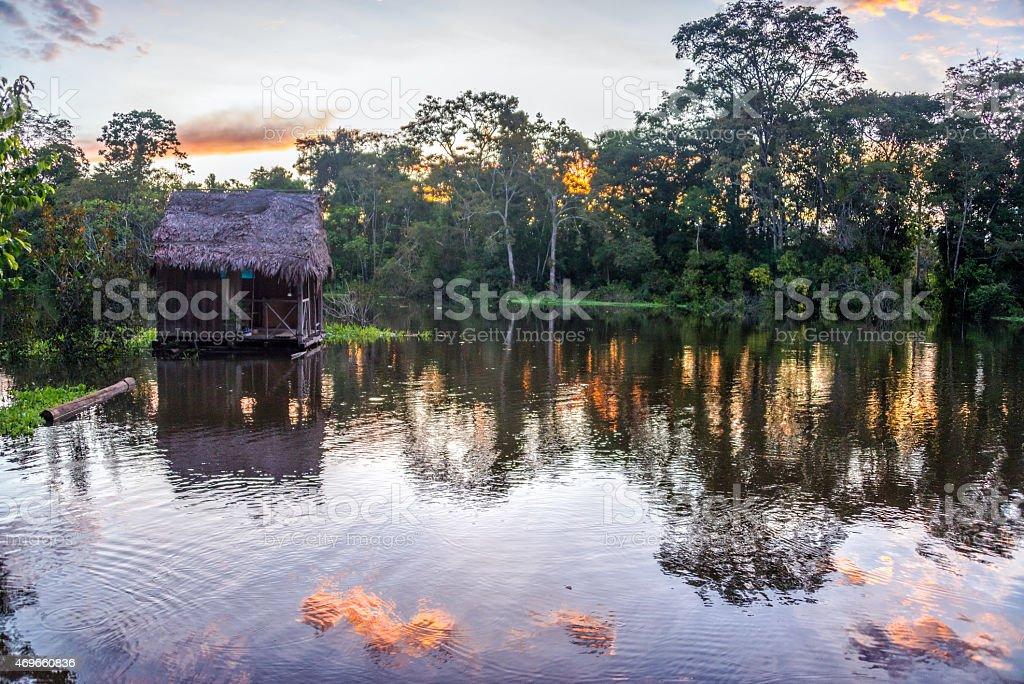 Amazon Rainforest at Sunset stock photo