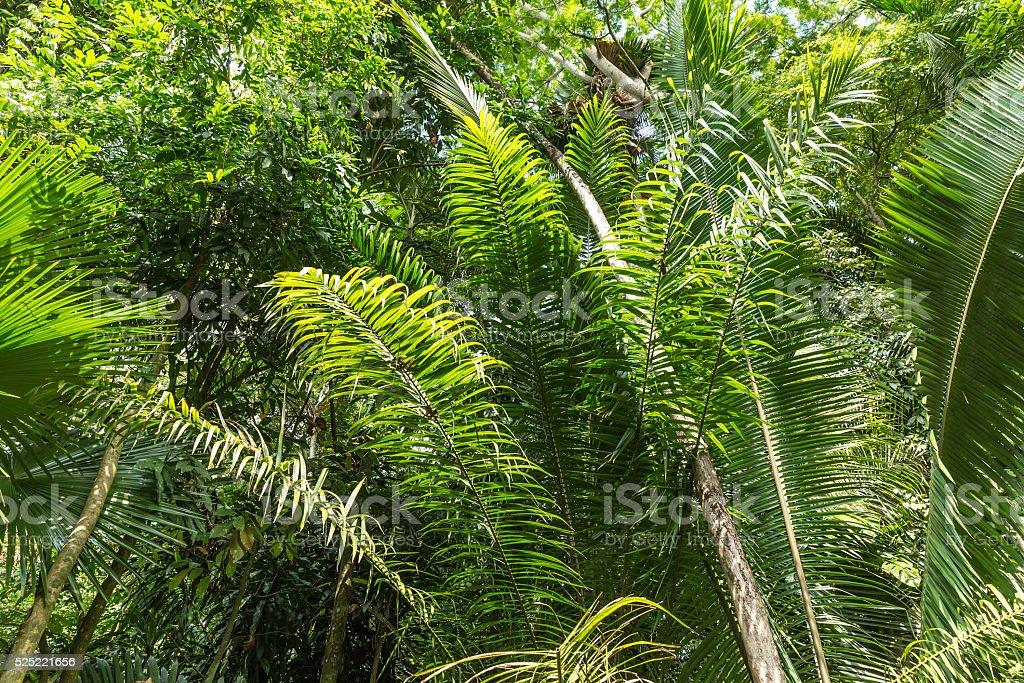 Amazon Rainforest, Brazil stock photo