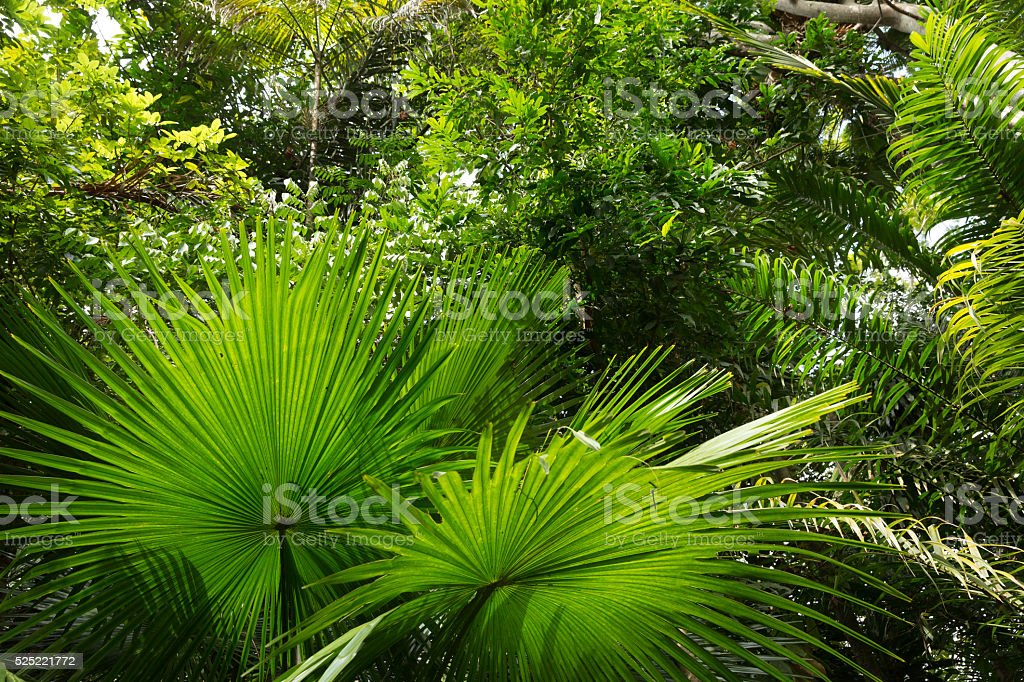 Amazon Rainforest, Brazil stock photo