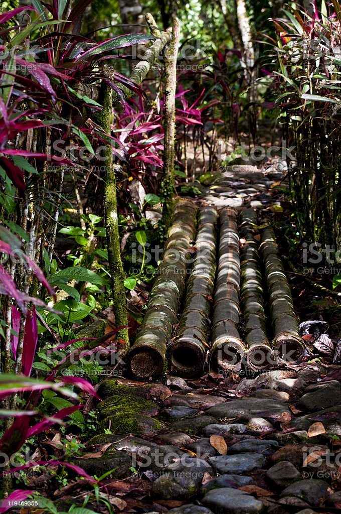 Amazon Rainforest, Jungle Path. Ecuador stock photo