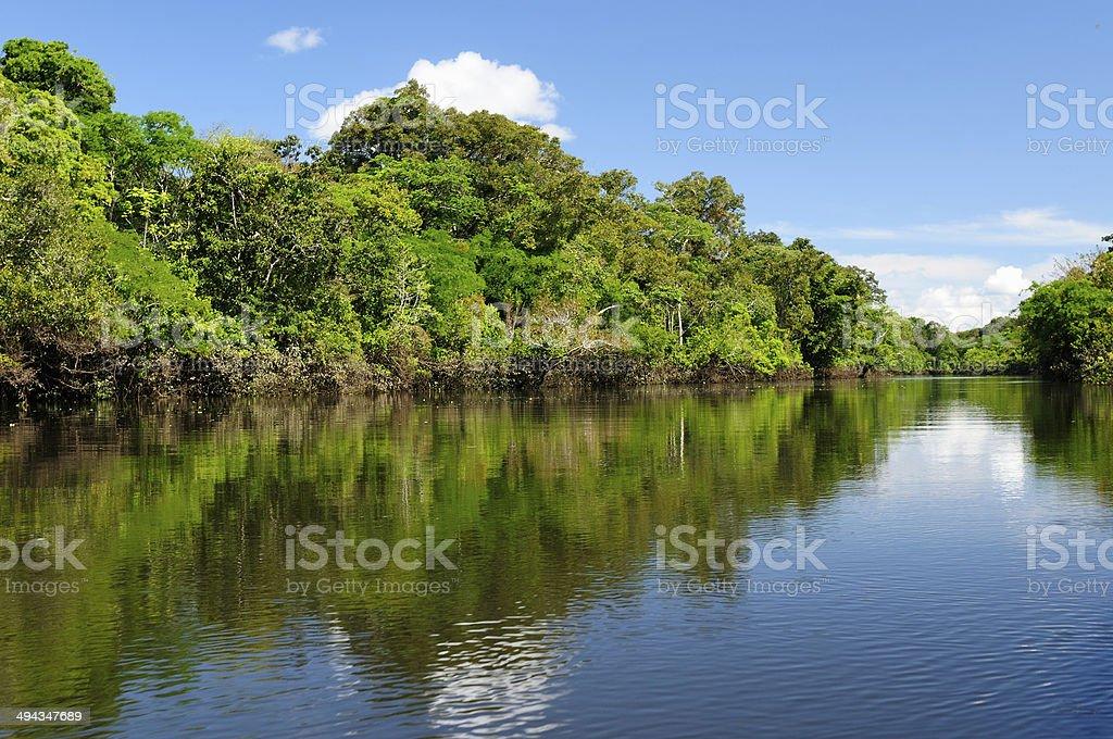 Amazon river landscape in Brazil stock photo