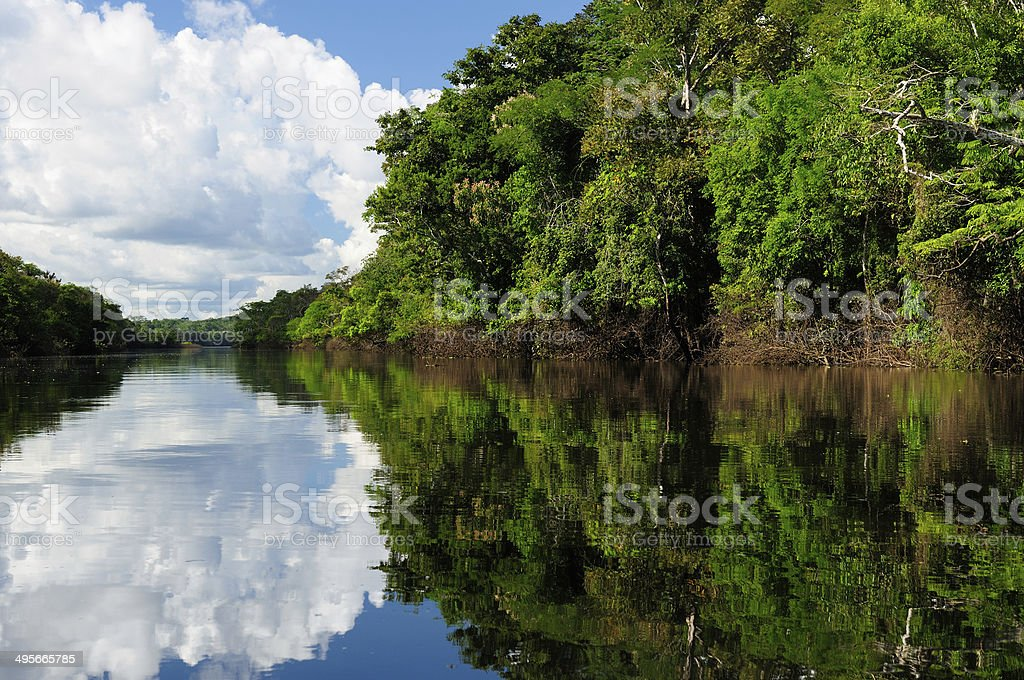 Amazon river landscape in Brazil stock photo