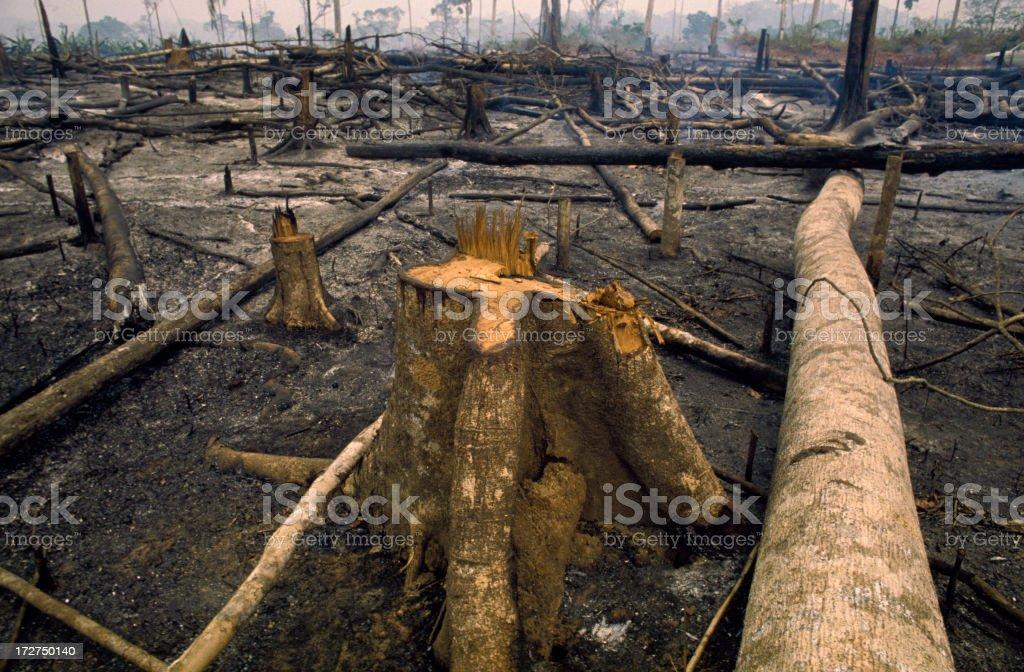 amazon river royalty-free stock photo