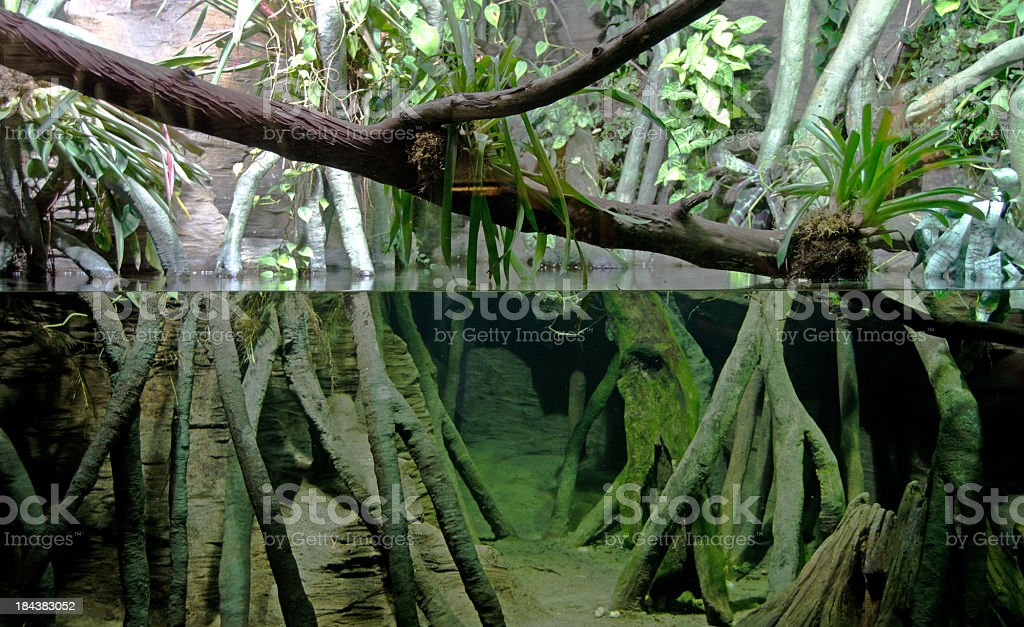 Amazon Roots and Water stock photo