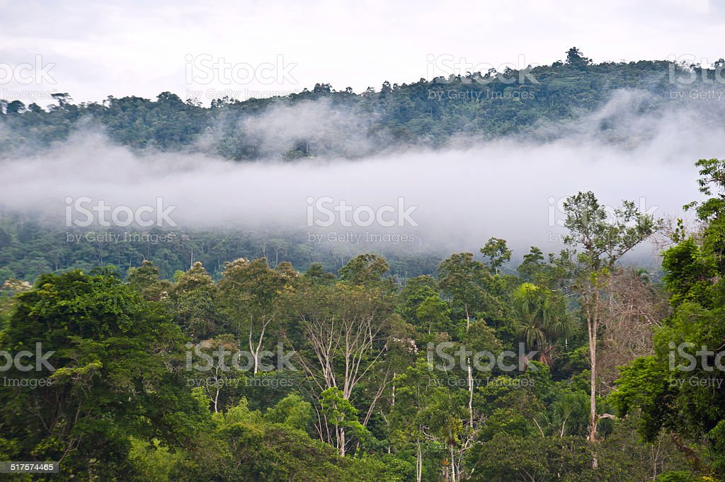 Amazon, View of the tropical rainforest, Ecuador stock photo