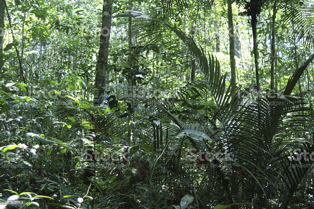 Amazonas Jungle royalty-free stock photo