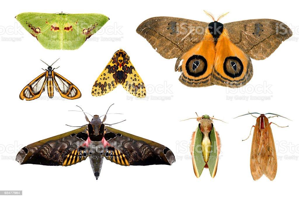 Amazonian moths royalty-free stock photo