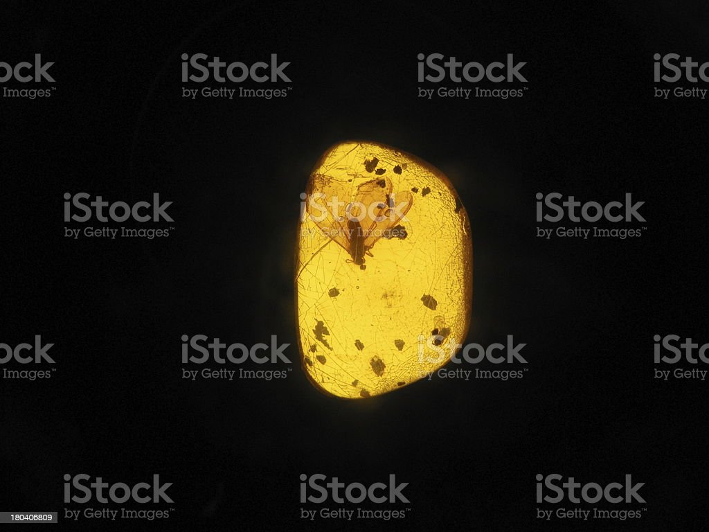 Amber isolated royalty-free stock photo