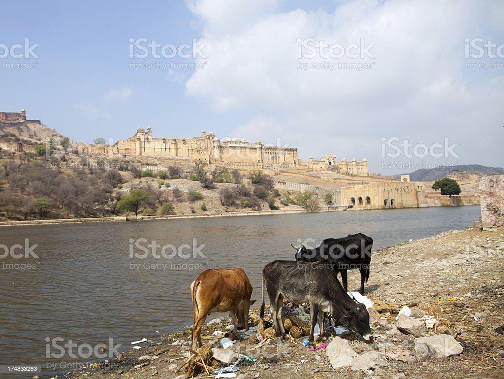 Amber Palace, Jaipur, India royalty-free stock photo