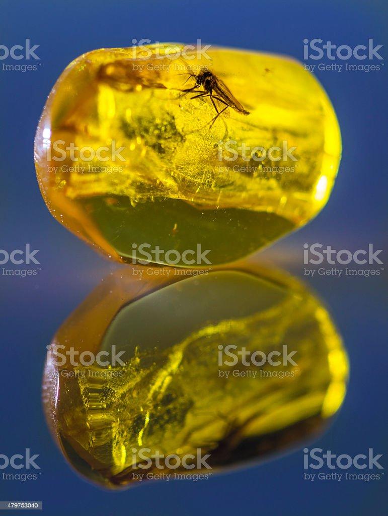 Amber Reflection stock photo