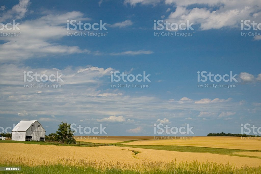 Amber Waves royalty-free stock photo