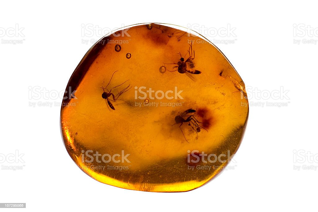 Amber with clipping path stock photo