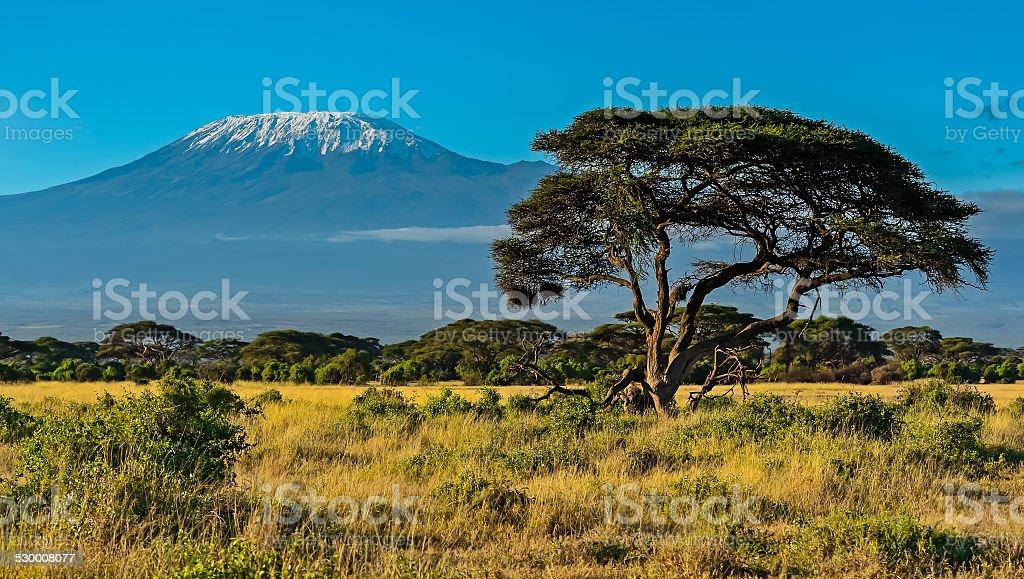 Amboseli National Park stock photo