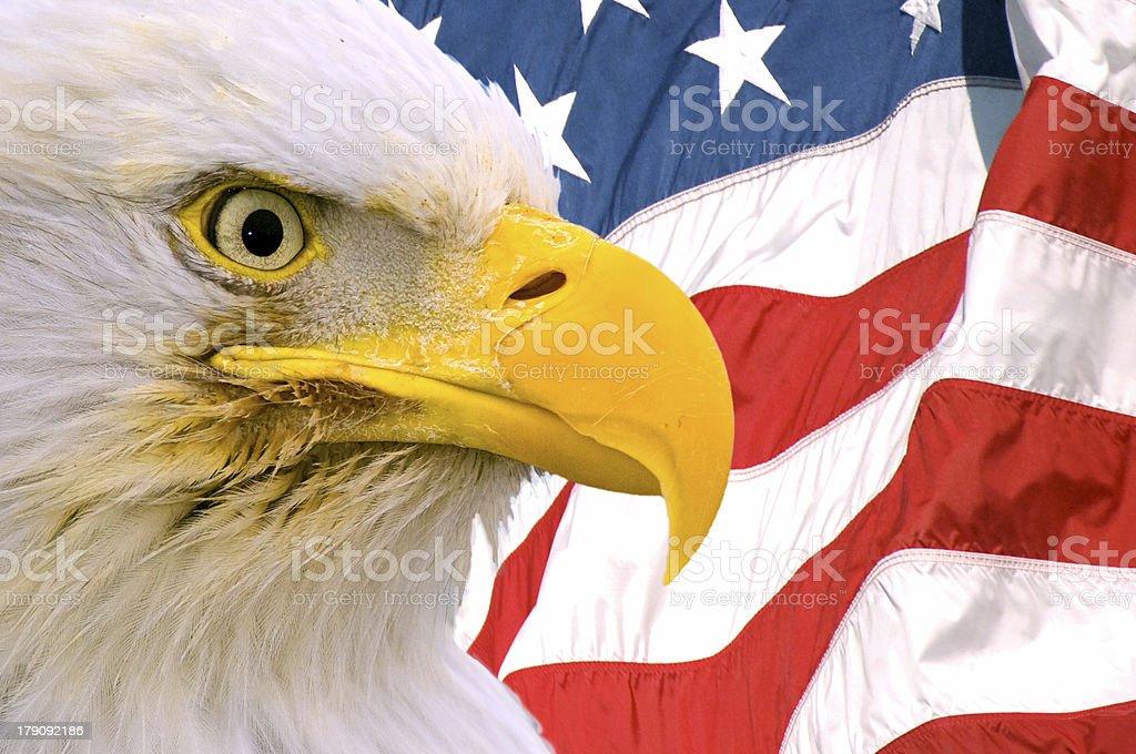 american bald eagle face superimposed over usa flag royalty-free stock photo