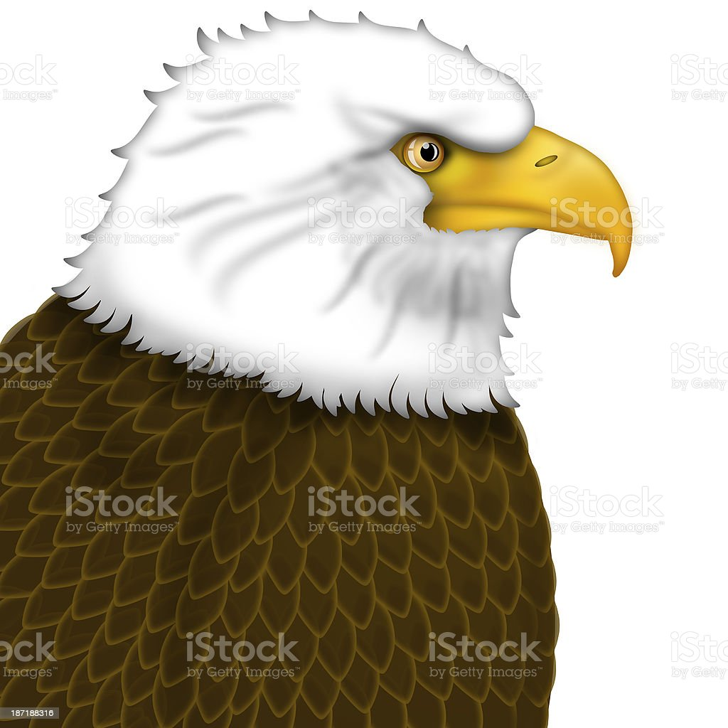 American Bald Eagle Portrait royalty-free stock photo