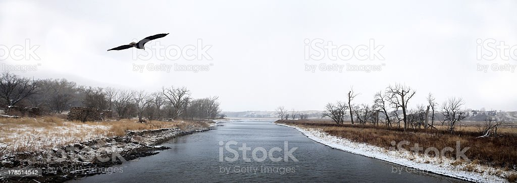 American Bald Eagle soaring above James River royalty-free stock photo
