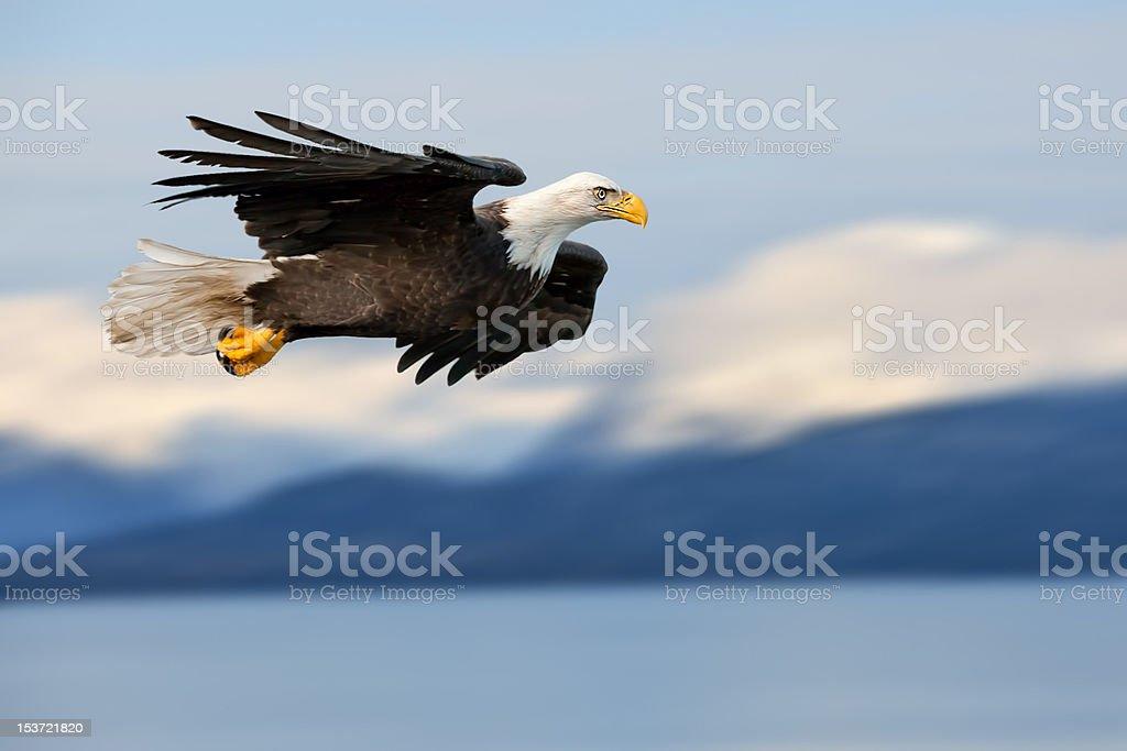 american bald eagle superimposed over alaska coastal mountain scene stock photo