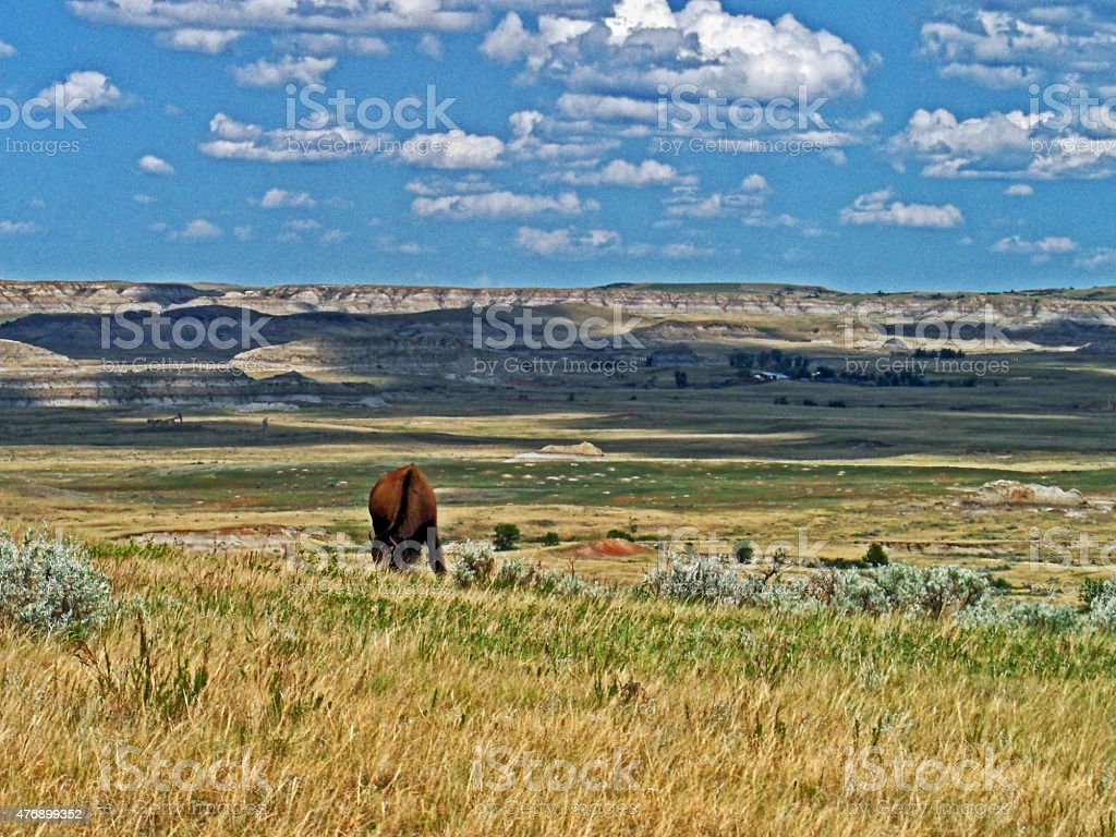 American Bison Buffalo in Theodore Roosevelt National Park stock photo