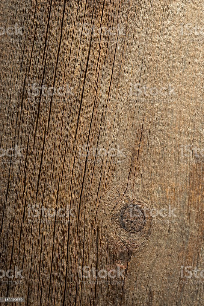 American Chestnut Background royalty-free stock photo