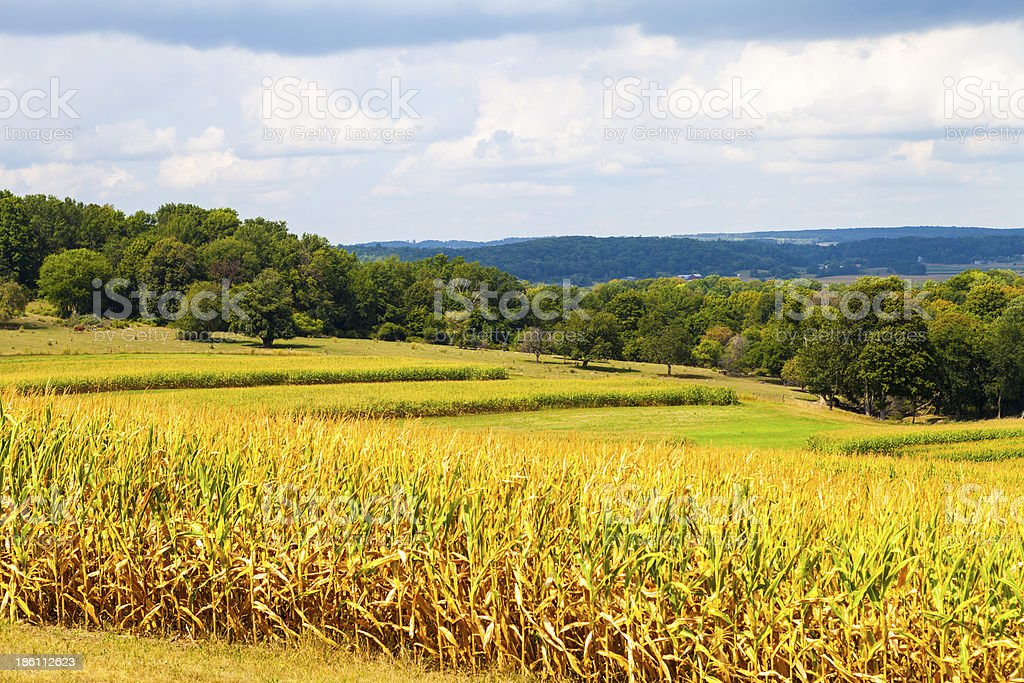 American Countryside Corn Field With Stormy Sky royalty-free stock photo