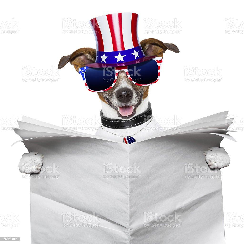 american dog reading royalty-free stock photo