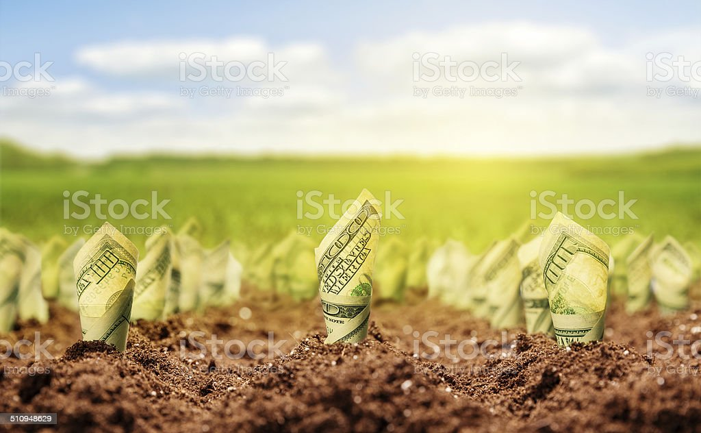 American dollars grow from the ground stock photo