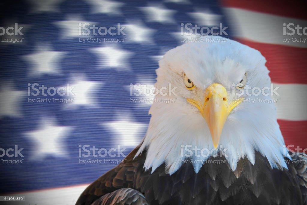 American eagle portrait stock photo