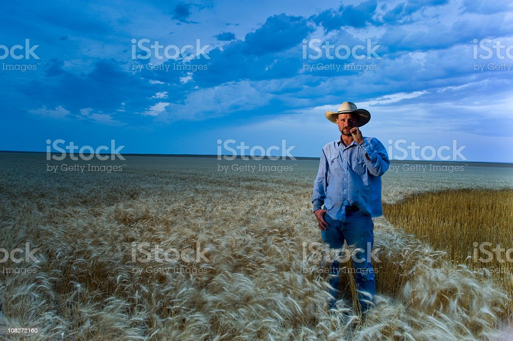 American Farmer among Wheat at Dusk in Kansas During Harvest stock photo