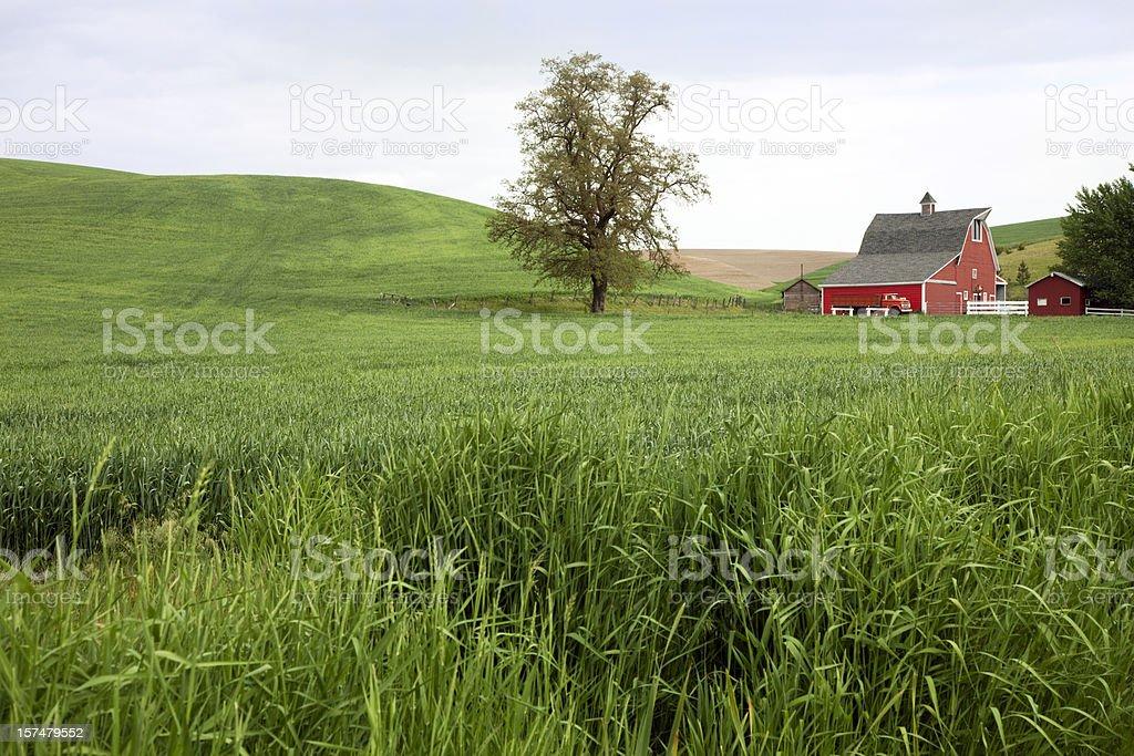 American Farmland royalty-free stock photo