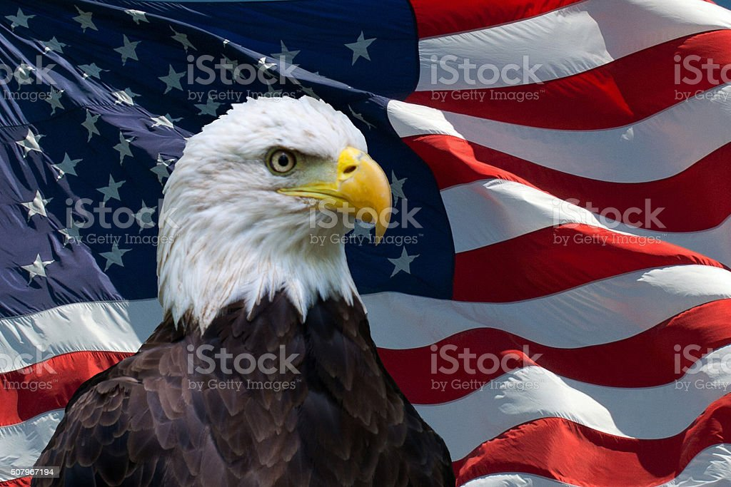 American Flag Eagle - New stock photo