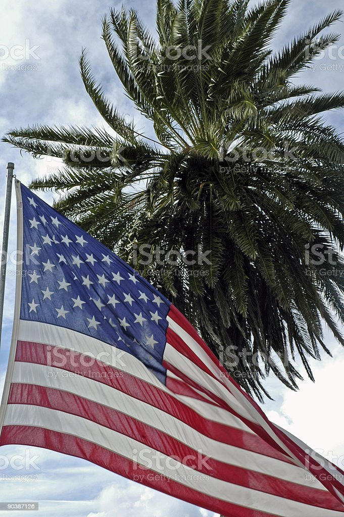American flag in the wind with palm behind stock photo