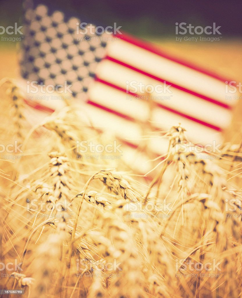American Flag in Wheat Field royalty-free stock photo