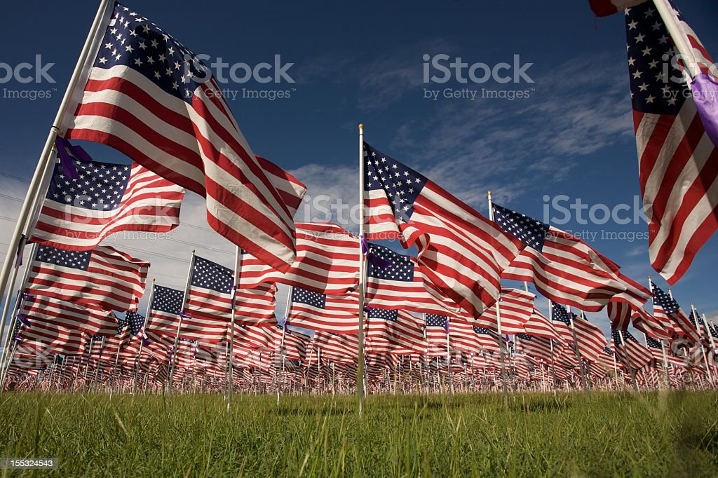 American Flags fly in a Grassy Field stock photo
