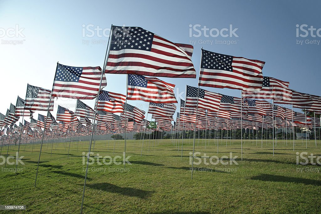 American flags in a field royalty-free stock photo