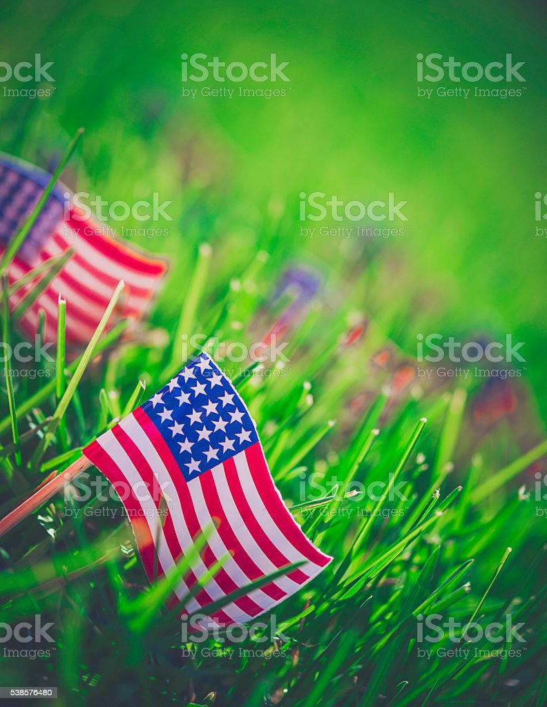 American flags in summer grass to celebrate Fourth of July stock photo