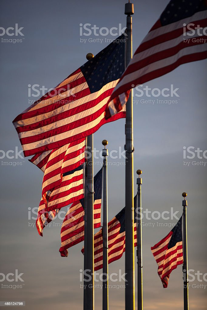 American Flags on The Mall in Washington DC. stock photo