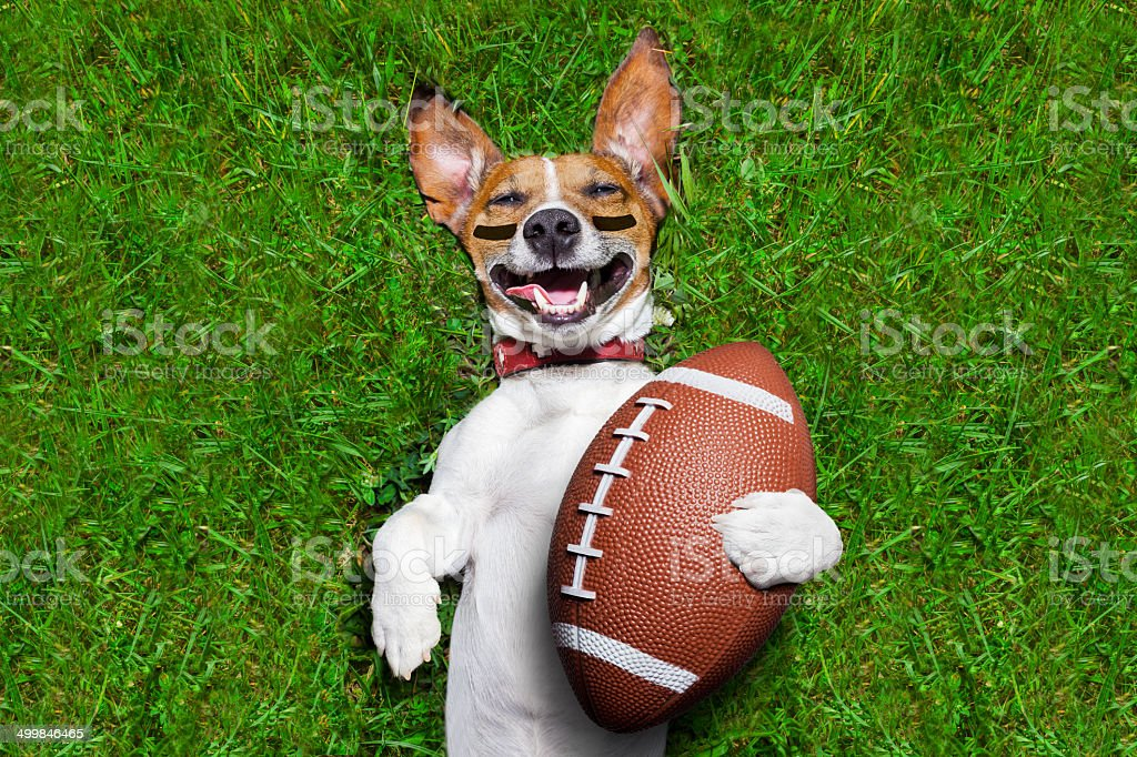 american football dog stock photo