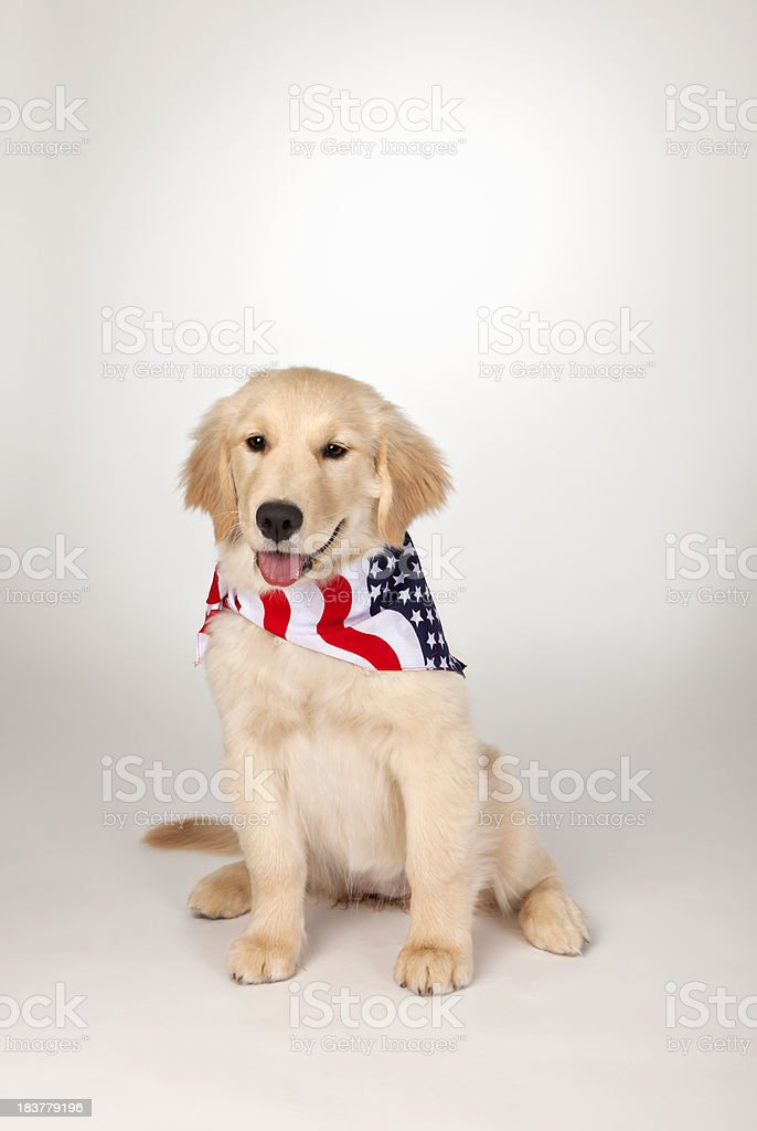 American Fourth of July Holiday Puppy stock photo