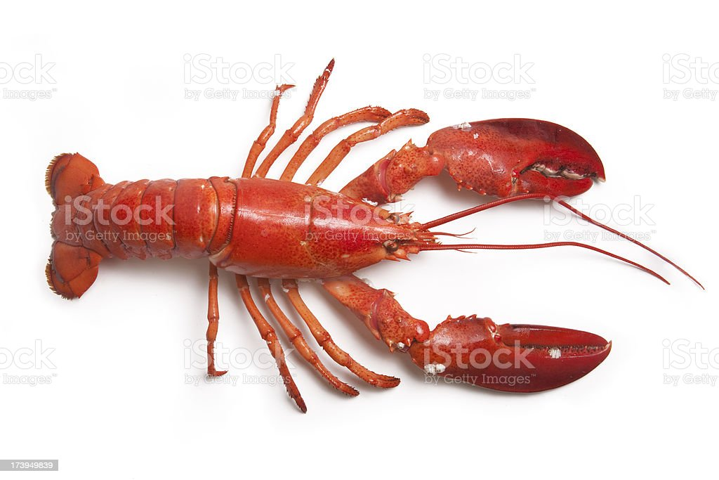 American Lobster stock photo