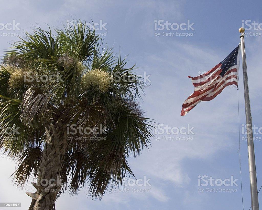 american palm tree stock photo
