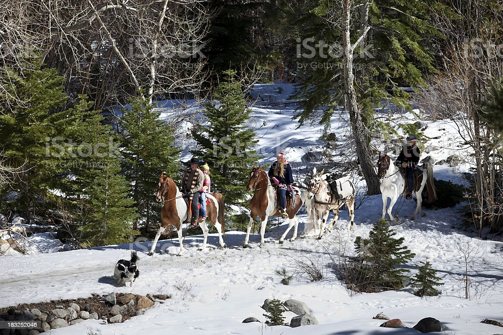 American Saddlebreds in Winter royalty-free stock photo