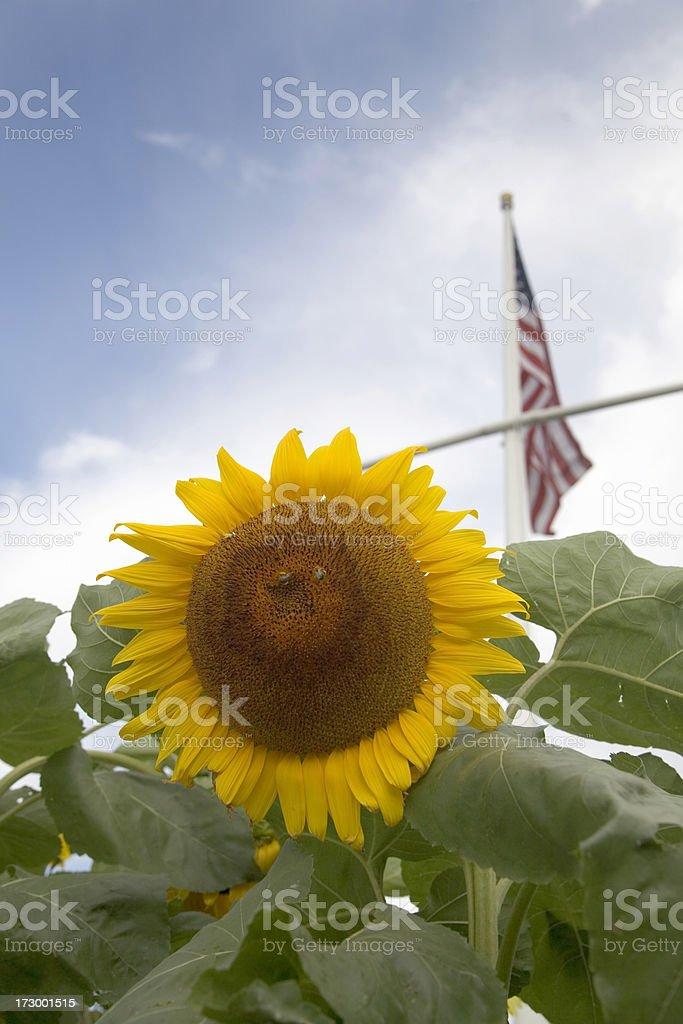 American Summer stock photo