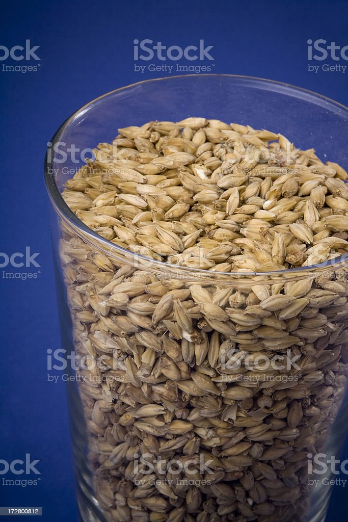 American Two Row malted barley, ready to make beer. stock photo