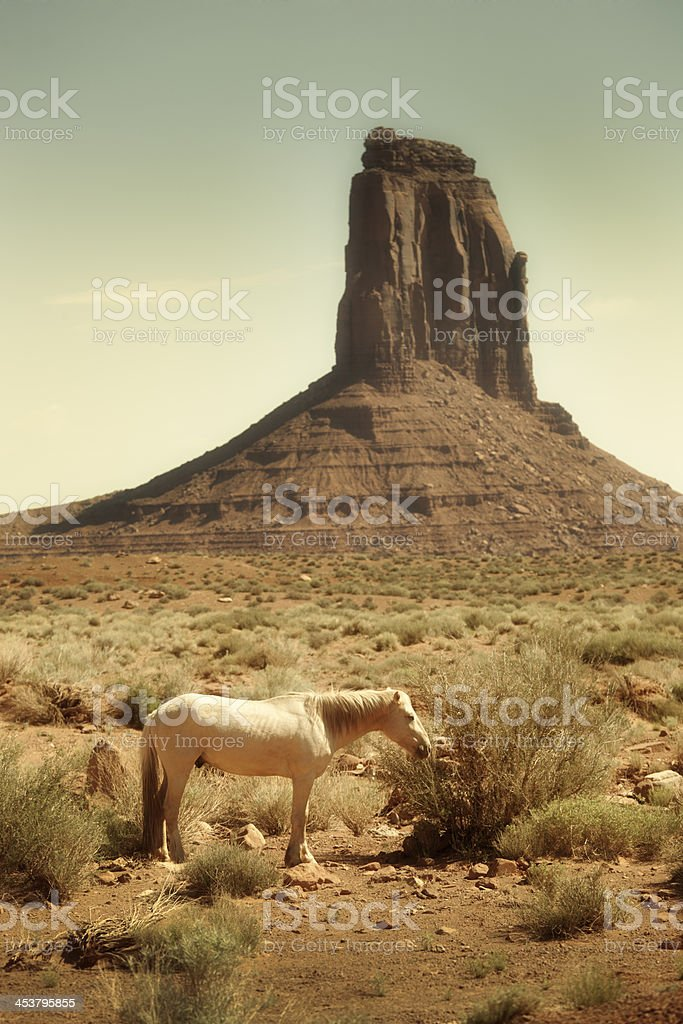 American West Wild Horse at the Monument Valley Tribal Park stock photo