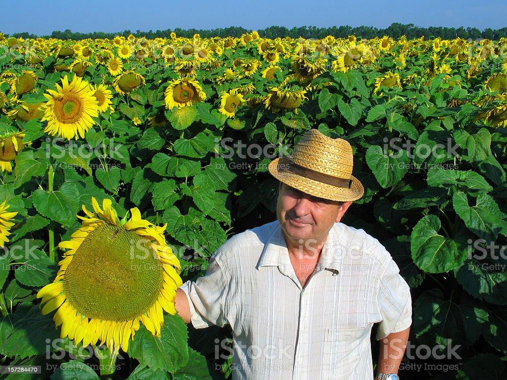 Amidst Sunflowers II royalty-free stock photo